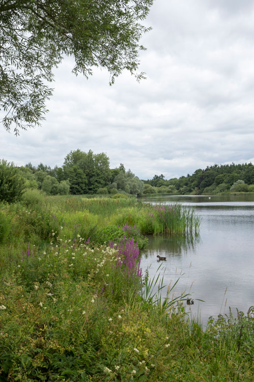 warnham-nature-reserve-Millpond-2