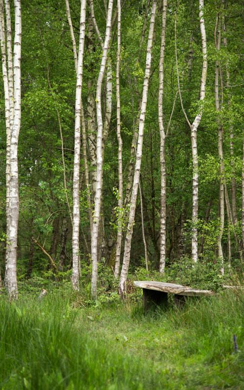 warnham-nature-reserve-Millpond-Plantation